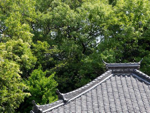 お寺の屋根.jpg