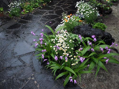 しおんの庭.jpg