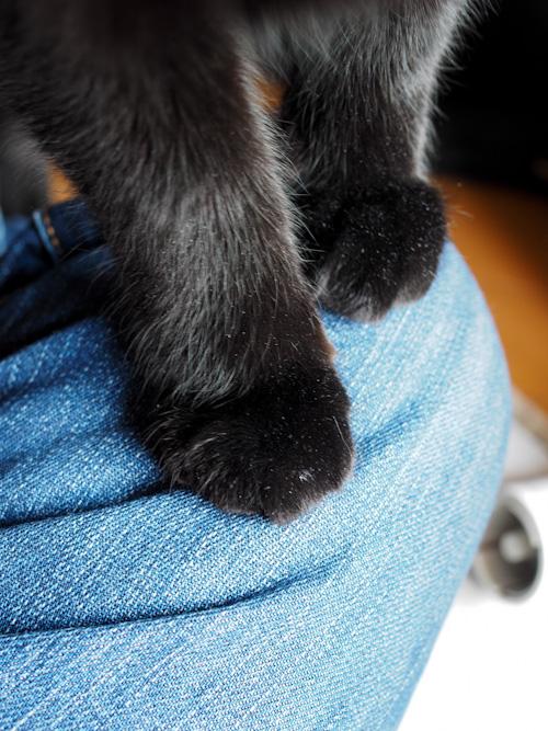 クロの足.jpg