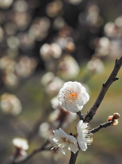 佐布里の春.jpg
