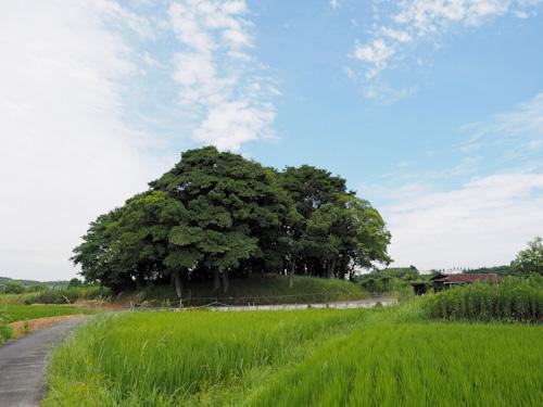 神様の小さな森.jpg