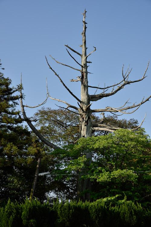 祠の木.jpg
