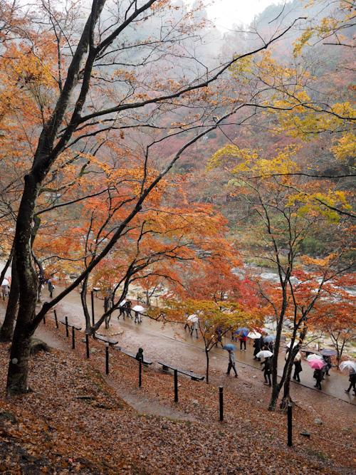 雨の香嵐渓.jpg