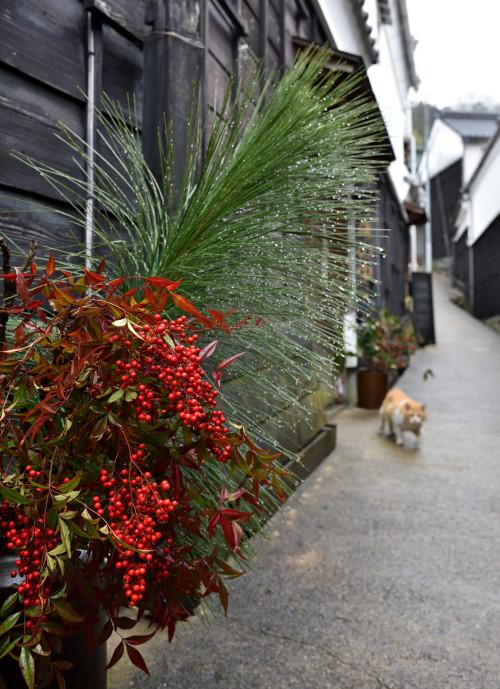 マンリン小路は猫の道.JPG