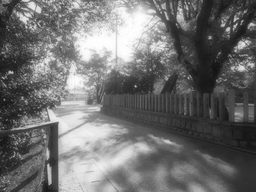午後の近所.jpg