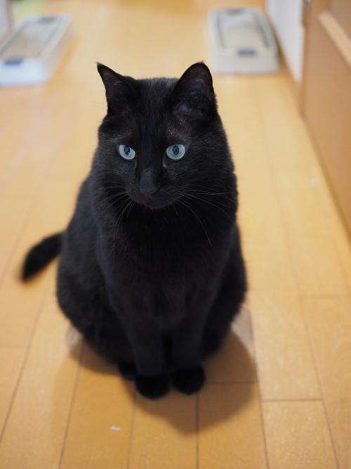 我が家の猫クロ.jpg