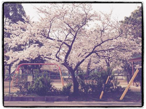 桜 また来年.jpg