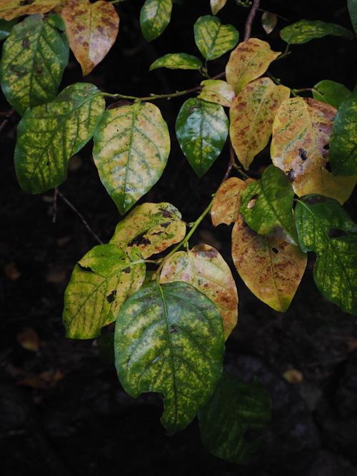秋の葉.jpg