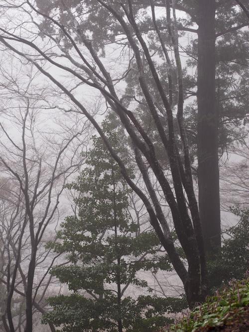 雨の飯盛山.jpg